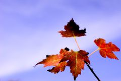 Folhas e céu Fotos de Stock