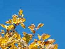 Folhas e céu Foto de Stock Royalty Free