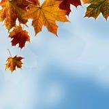 Folhas e céu bonitos de outono Fotos de Stock