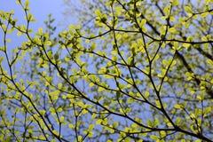Folhas e céu do verde foto de stock