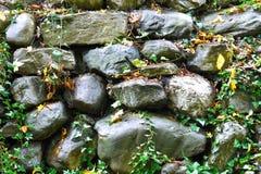 Folhas e cogumelo na terra imagens de stock