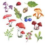 Folhas e cogumelos de outono bonitos ilustração royalty free