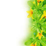 Folhas e daffodils Foto de Stock Royalty Free