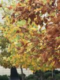 Folhas e estações das árvores fotos de stock royalty free