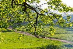 Folhas e estrada Foto de Stock Royalty Free