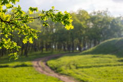 Folhas e estrada Fotografia de Stock Royalty Free
