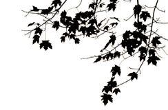 Folhas e filiais Fotografia de Stock