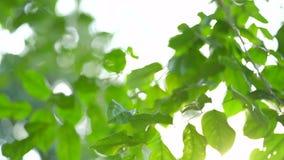 Folhas e filiais do verde filme