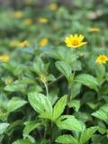 Folhas e flores imagens de stock royalty free