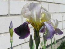 Folhas e flores Fotografia de Stock Royalty Free
