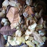 Folhas e flores caídas Fotografia de Stock