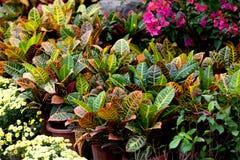 Folhas e flores coloridas Fotografia de Stock Royalty Free