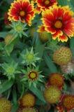 Folhas e flores da queda   Imagens de Stock Royalty Free