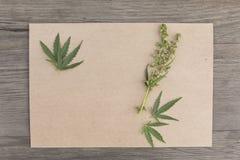 Folhas e flores do cânhamo com papel vazio do ofício no fundo de madeira do grunge velho Vista superior Modelo de Minimalistic fotos de stock royalty free