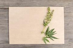 Folhas e flores do cânhamo com papel vazio do ofício no fundo de madeira do grunge velho Vista superior Modelo de Minimalistic imagem de stock royalty free