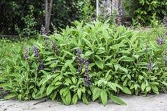 Folhas e flores prudentes Imagem de Stock Royalty Free