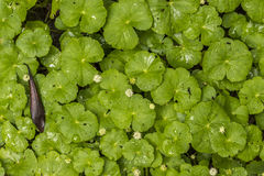 Folhas e flores tropicais Fotografia de Stock Royalty Free
