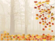 Folhas e floresta de outono Foto de Stock