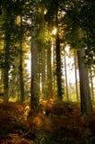 Folhas e floresta de outono Fotografia de Stock