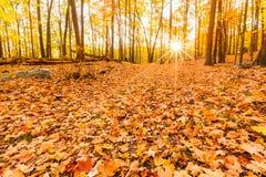 Folhas e folhagem de outono caídas Imagem de Stock