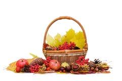Folhas e frutas de outono Imagem de Stock Royalty Free