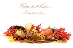 Folhas e frutas de outono fotografia de stock royalty free