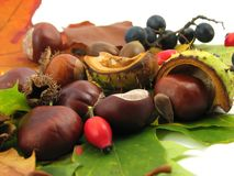 Folhas e frutas do outono Imagem de Stock Royalty Free