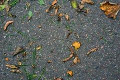 Folhas e grama no asfalto Fotos de Stock Royalty Free