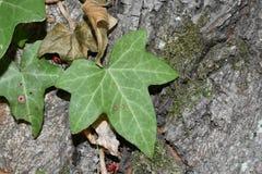 Folhas e insetos Imagens de Stock