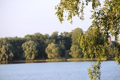 Folhas e lago do vidoeiro Fotos de Stock Royalty Free