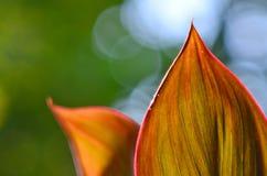 Folhas e luz foto de stock