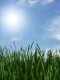 Folhas e luz do sol do verde Fotografia de Stock