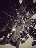 Folhas e luz do sol fotografia de stock
