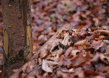 Folhas e madeira Fotos de Stock Royalty Free