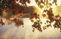 Folhas e névoa de outono, Imagem de Stock