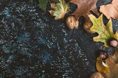 Folhas e nozes de outono na placa azul Foto de Stock Royalty Free