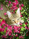 Folhas e olhos Imagem de Stock Royalty Free