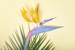 Folhas e pássaro tropicais da flor de paraíso no fundo pastel Foto de Stock