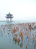 Folhas e pavilhão Withered Imagem de Stock