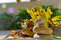 Folhas e pedras Foto de Stock Royalty Free