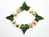 Folhas e pedras Fotografia de Stock