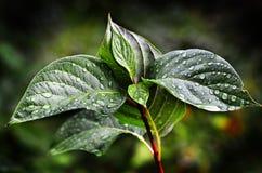 Folhas e plantas na tempestade Imagens de Stock Royalty Free