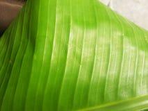 Folhas e plantas verdes da natureza Imagens de Stock