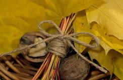 Folhas e porcas amarelas de outono Fotografia de Stock