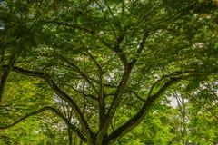 Folhas e ramos Fotografia de Stock