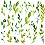 Folhas e ramos do verde da aquarela do vetor ilustração stock