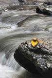 Folhas e rocha Imagens de Stock