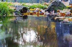 Folhas e rochas coloridas na angra Imagens de Stock