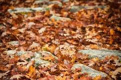 Folhas e rochas de outono Imagens de Stock Royalty Free