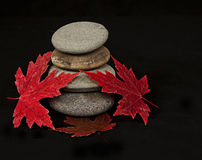 Folhas e rochas de outono Fotografia de Stock